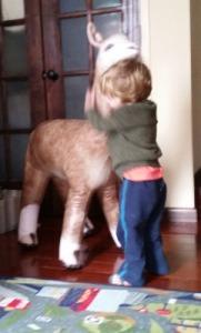 Henry with alpaca