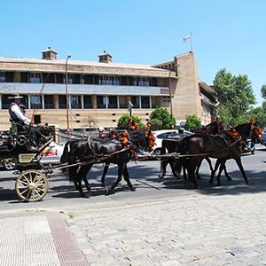 horses seville